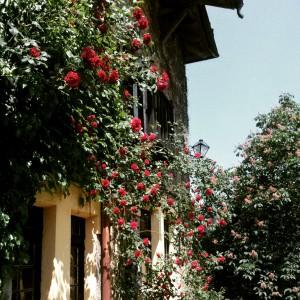Rosas en la fachada